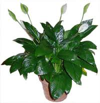 6a00e008cd5a658834014e884aaad4970d-600wi House Plant With Spiky Leaves on indoor plants with colorful leaves, house plants with colorful leaves, house plant identification leaves, house plant with brown leaves, house plant with curly leaves, house plant with striped leaves, house plant with bumpy leaves, house plant with heart shaped leaves, house plant with fuzzy leaves, house plant with jagged leaves, house plant with green and yellow variegated leaves, house plant with big leaves, indoor plants with long leaves, house with pink and green plant leaves, house plant with pointed leaves, house plant spiky green yellow, plant with spikes on leaves, house plant with waxy flowers, house plant with peach blooms,